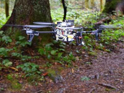 Il drone all'interno di un Bosco